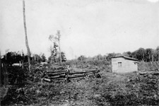 Photograph of a shack and small garden on mostly uncleared land, Manitoba, no date