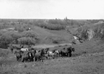 Photo d'un troupeau de chevaux près de Moose Jaw, en Saskatchewan, [1909]