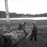 Black and white photograph of three boys by a forested shore: two sitting on a fallen totem pole, the other watching. A bicycle is leaned against the pole.