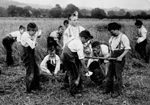 Photograph of emigrant boys working in the fields